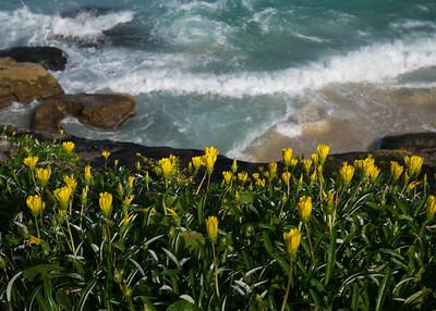 Yellow flowers, springtime.