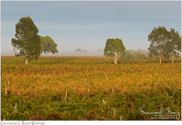 Good morning from Coonawarra winery region, South Australia