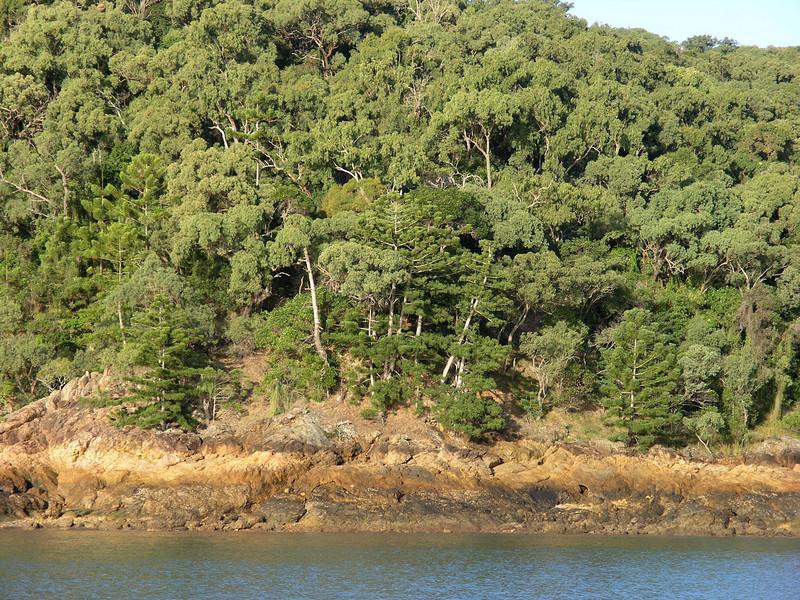 Shoreline at Pearl Bay, Capricorn Coast , Queensland