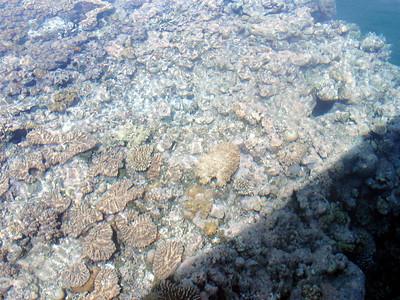 13  Ribbon Reef No  5