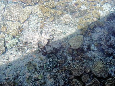 12  Ribbon Reef No  5
