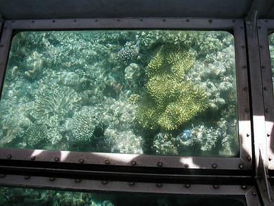 11  Ribbon Reef No  5