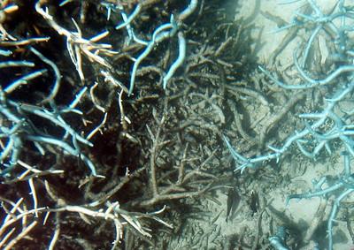 20  Ribbon Reef No  5