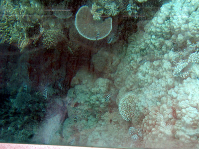 06  Ribbon Reef No  5