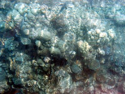 07  Ribbon Reef No  5
