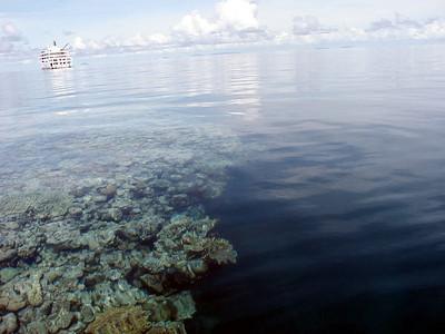 15  Ribbon Reef No  5