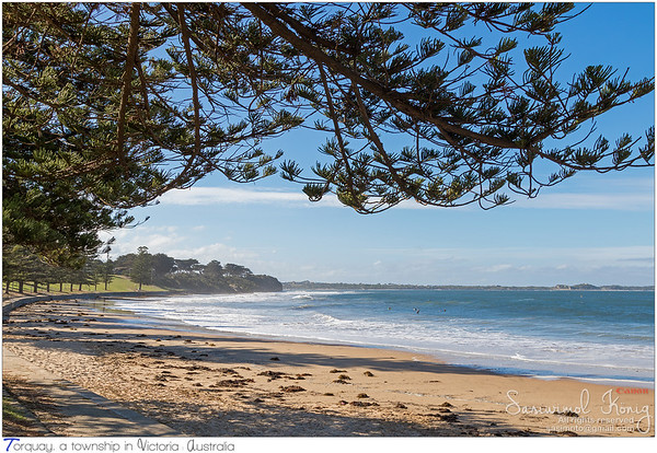 View of Torquay surf beach promenade along Norfolk Pine trees in Victoria, Australia
