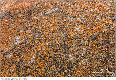Remarkable Rocks covered by golden orange lichen
