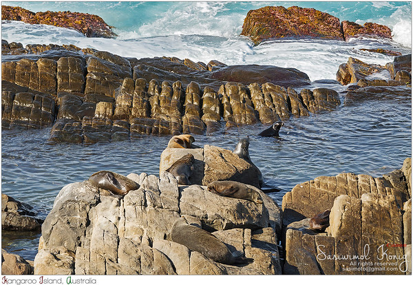 Swimming time for New Zealand fur seals