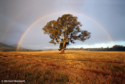 After the Rain, Dunkeld, Victoria, Australia