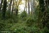 Overgrown forest. Bright, Victoria