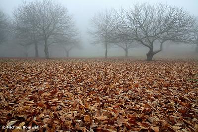 Forgotten Orchard, Yarra Ranges, Victoria