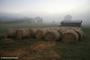 A misty morning on the farm, Tasmania