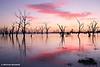 Lake Victoria Dawn, NSW