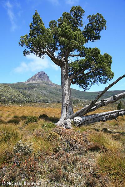 View of Barn Bluff, Cradle Mountain Nat. Park, Tasmania