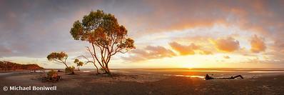Mangrove Trees, Moreton Bay, Queensland, Australia