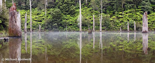 Lake Elisabeth, Otways National Park, Victoria, Australia
