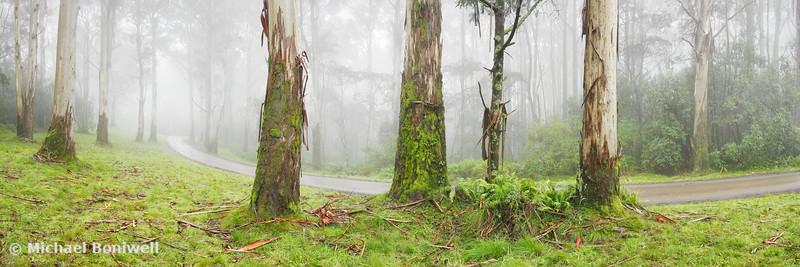 Road to Mt Macedon, Victoria, Australia