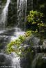Nelson Falls #2, Tasmania.
