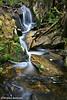 Falls, Cradle Mountain Nat. Park, Tasmania.