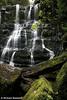 Nelson Falls #1, Tasmania.