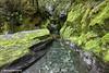 Tranquility, West Coast, South Island, New Zealand