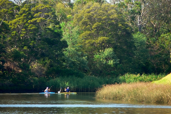 Autumn Light at Herring Island - Scullers