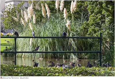 Where pigeons and waterbirds hang out. Peaceful spot at Carlton Gardens, the edge of CBD in Melbourne, Australia