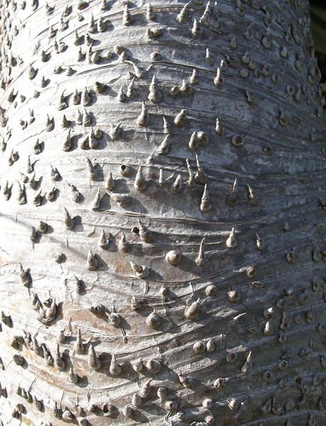 Pandanus bark
