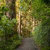 Dorrigo national Park, Skywalk & rainforest walks.