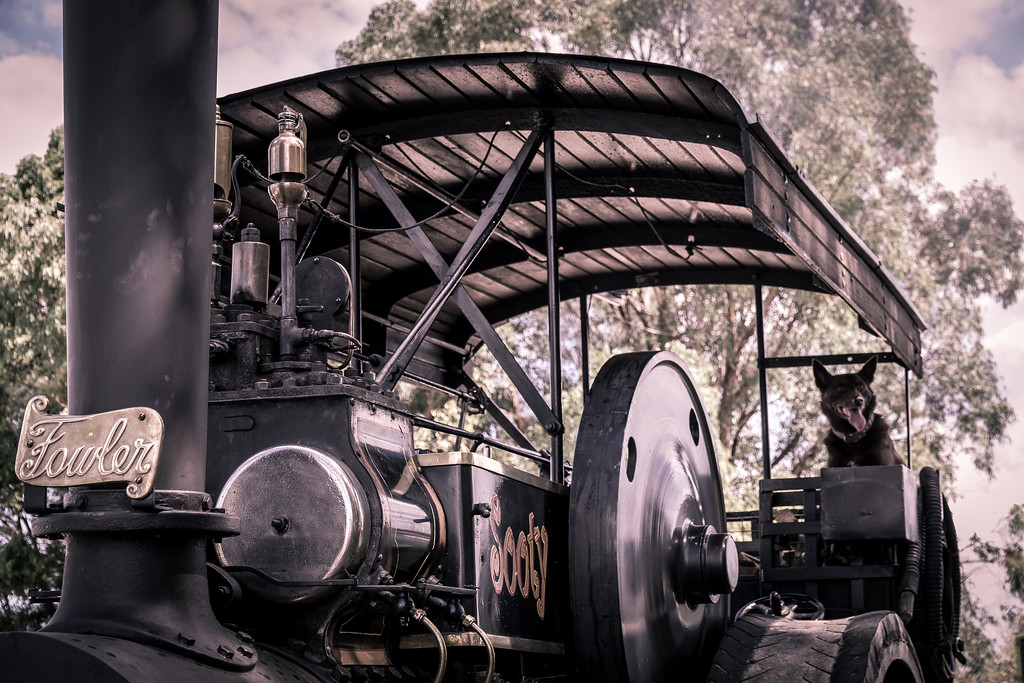 Sooty, Maitland Steamfest