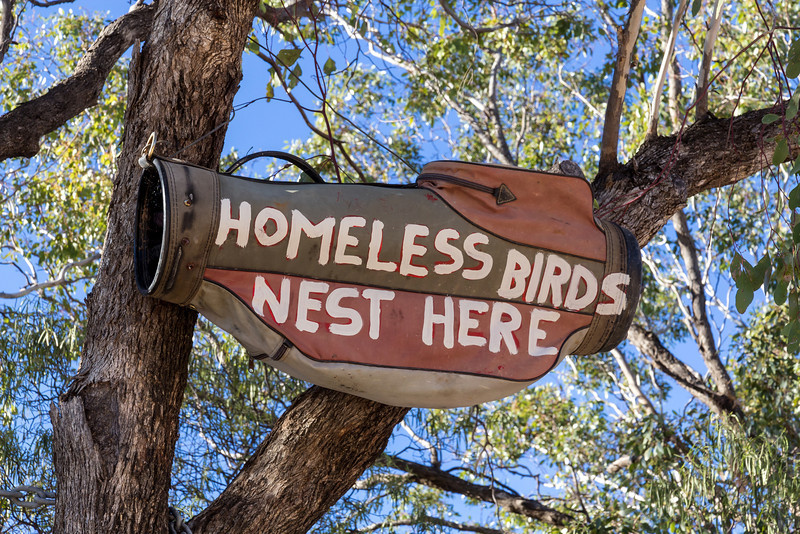 Homeless Birds