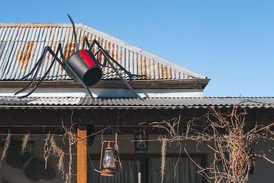 Redback spider on a tin roof