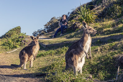 Kangaroo's at Woody Head
