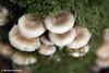 Fungi on Tree #1.