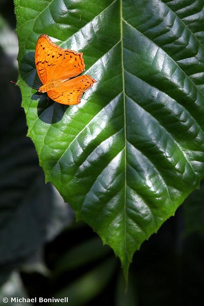 Butterfly #2. 2006.