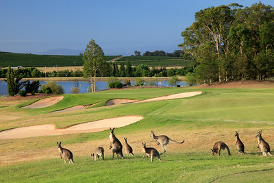 Cypress Lakes Resort, New South Wales, Australia