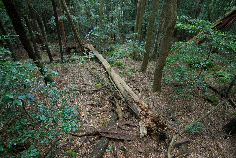 Fallen Tree, Blue Mountains National Park - NSW, Australia