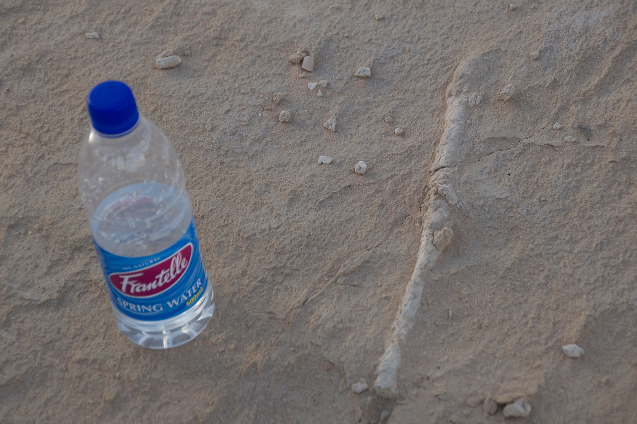 Fossil with Water Bottle for Scale  - Mungo National Park, New South Wales, Australia