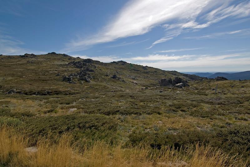 Grass near Summit of Mount Kosciusko - NSW, Australia