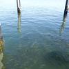 Fishes near the pier<br /> <br /> Halak a mólóhoz közel