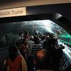 Shark tunnel - Sydney Aquarium<br /> <br /> Cápa alagút - Sydney Akvárium