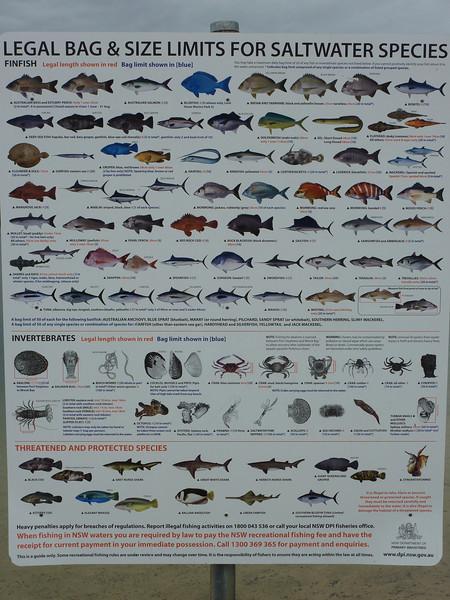 Fish found in Wallis Lake