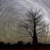 Boab Tree and Star Trail in the Outback of Australia