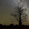 5 minute shot of boab tree in the Outback of Australia