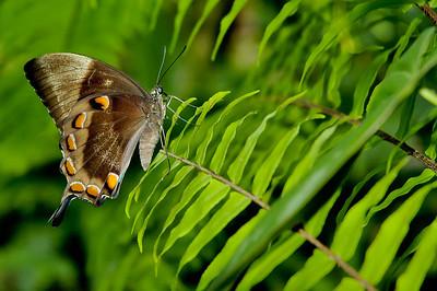 Butterfly Sanctuary Kuranda
