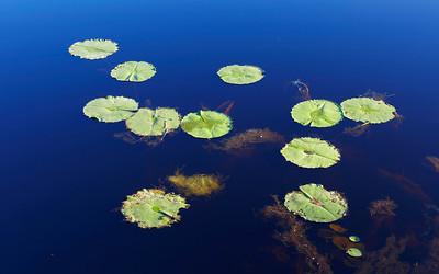 Tyagarah Swamp