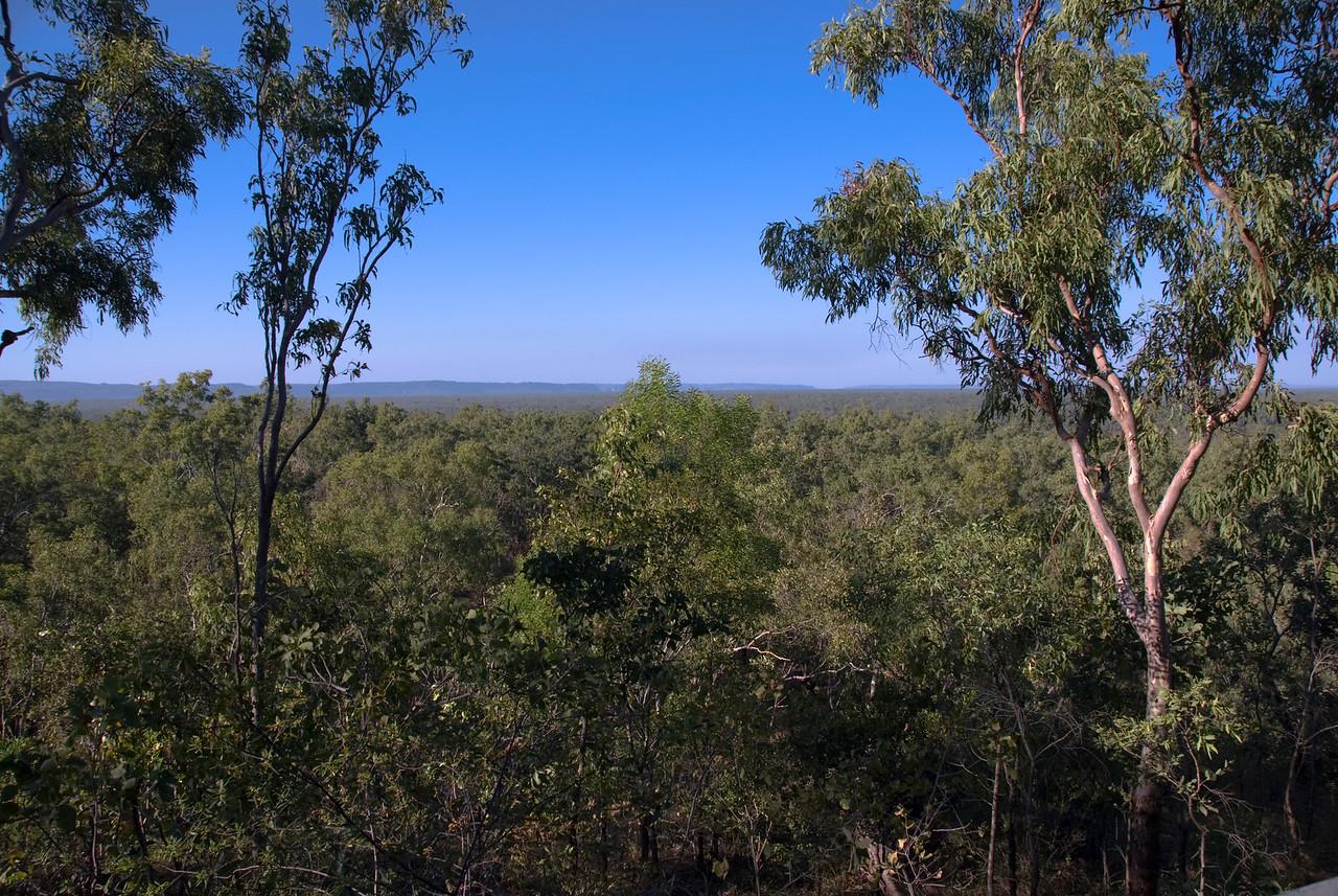 Treetops, Anbangbang, Kakadu National Park - Northern Territory, Australia