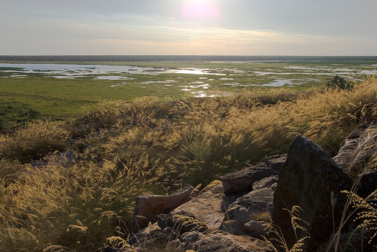 Grass and Wetland, Kakadu National Park - Northern Territory, Australia