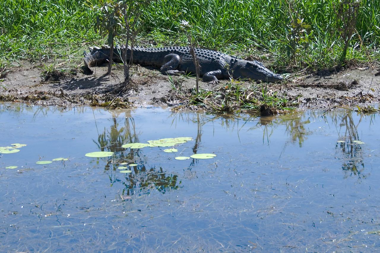 Female Crocodile 1, Alligator River, Kakadu National Park - Northern Territory, Australia